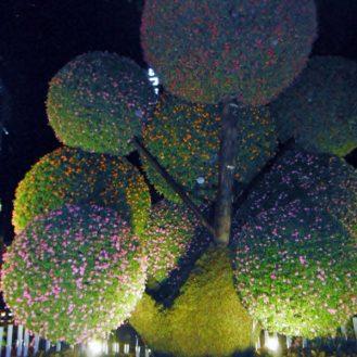 A beautiful topiary design